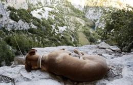 岩場には犬がいっぱい。
